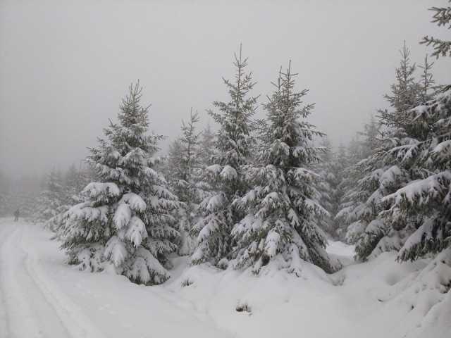 halve meter sneeuw in Ardennen
