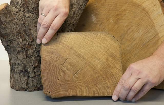 jaarringen-in-hout