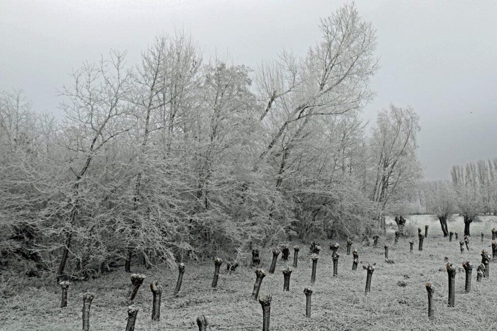 Winterse taferelen door de vorming van rijm (Tim Scheir)