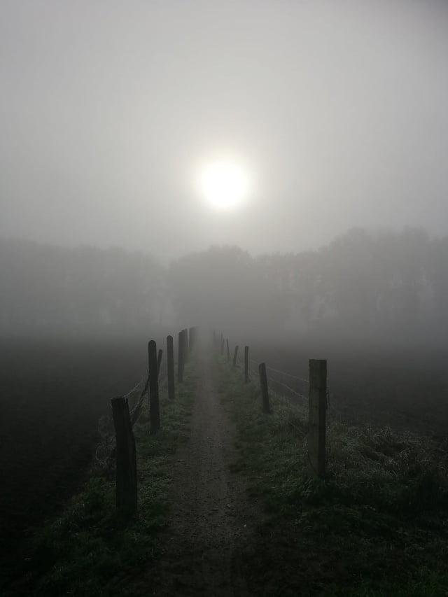 Mist (Lydia De Busser)