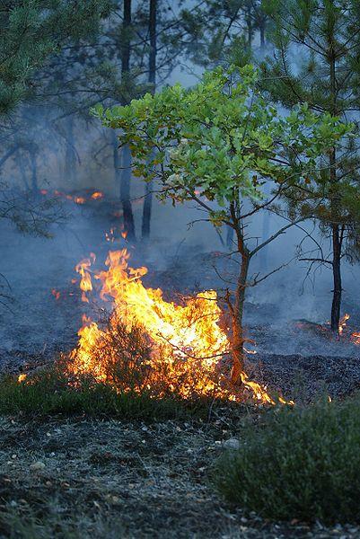 voorbeeld natuurbrand