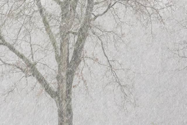 een boom gezien tijdens een sneeuwbui