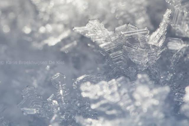 ijskristallen op takjes