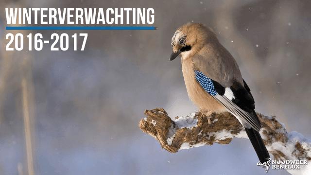 winterverwachting-2016-2017-benelux