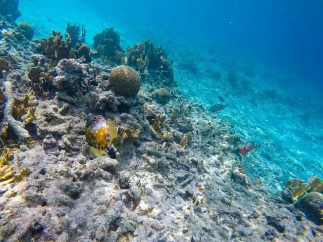 koraalrif-beschadigd