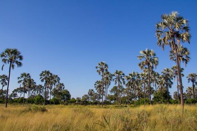 Palmbomen op door termieten gevormde eilanden