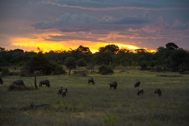 Zonsondergang boven de savanne