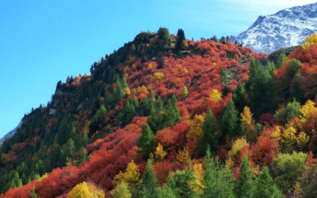 nazomerse herfstkleuren in alpen